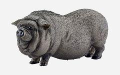 Vijetnamska svinja