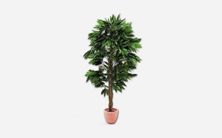 Mango stablo 180 cm 30206